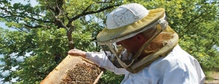 apiculteur pro